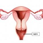 Vagina B